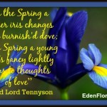 """In the Spring a livelier iris changes on the burnish'd dove; In the Spring a young man's fancy lightly turns to thoughts of love."""