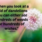 """""When you look at a field of dandelions you can either see hundreds of weeds or hundreds of wishes."" -Unknown"""