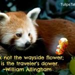 """Pluck not the wayside flower;"""